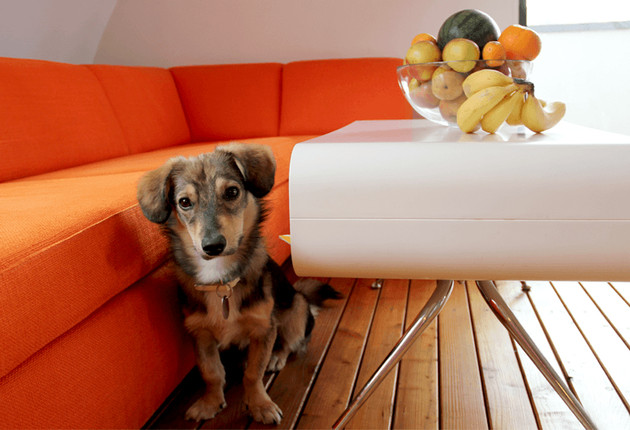 Officehund Gizmo und das Sofa in orange in der COSMOTO Lounge